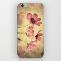 Dreamy Cosmea iPhone & iPod Skin