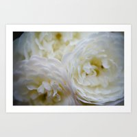Grace Roses Art Print