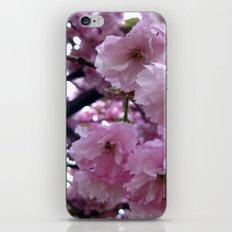 Pink Blossom iPhone & iPod Skin