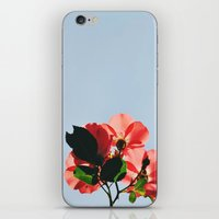 Rose iPhone & iPod Skin