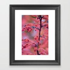 De PinkHarmony  Framed Art Print
