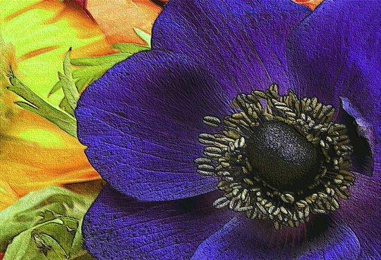 All of My Heart- Flower Power Anemone Art Print