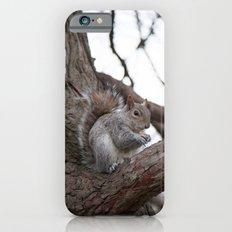 Squirrel with peanut iPhone 6 Slim Case