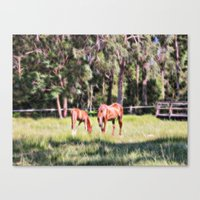 Horse And Foal Feeding I… Canvas Print