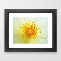 Rosa Golden Wings Framed Art Print