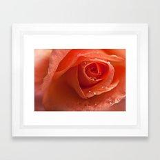 roses dream Framed Art Print