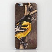 Baltimore Oriole iPhone & iPod Skin