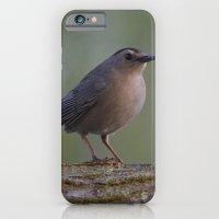 Gray Catbird near Sunrise iPhone 6 Slim Case