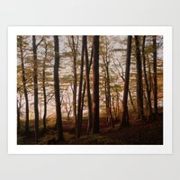 Autumn In The Woods 2 Art Print