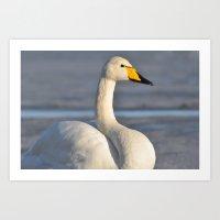 Whooper Swan Art Print