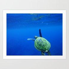 Turtle of the Sea Art Print
