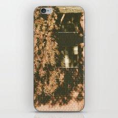 autumn tree, shadow iPhone & iPod Skin