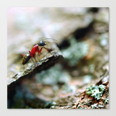 Ant Insect Photography, Nature, Macro, Home Decor Canvas Print
