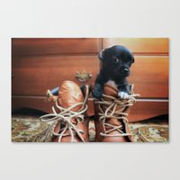 Teddy.  Canvas Print
