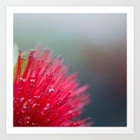 Bottlebrush Art Print