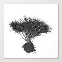 Floating Shrubbery Canvas Print