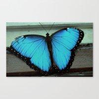 Broken-Winged Butterfly Canvas Print