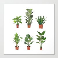 Watercolor Plant Collection Canvas Print