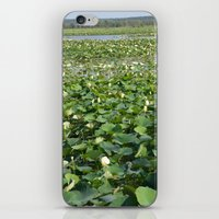 Amana Lilly Pond iPhone & iPod Skin