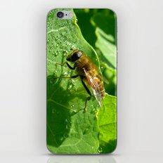 honeybee macro iPhone & iPod Skin
