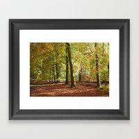 Autumnal Beech Trees In … Framed Art Print