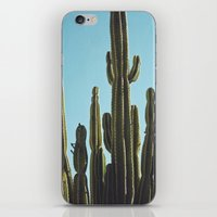 At the Cactus Garden iPhone & iPod Skin