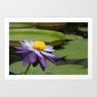 Open Lotus Art Print