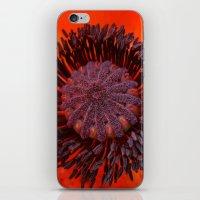 Poppy 3 iPhone & iPod Skin