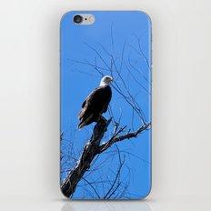 Clear Sight (Bald Eagle) iPhone & iPod Skin