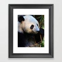 Panda Nap Framed Art Print