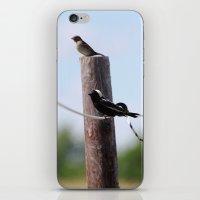 Bobolinks iPhone & iPod Skin