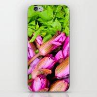 Lotus Flowers iPhone & iPod Skin