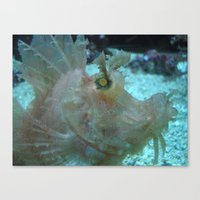 Crazy Fish Canvas Print