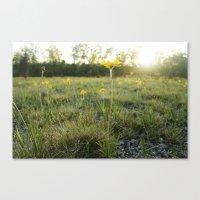 Lakeside Daisy Canvas Print