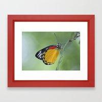 Butterfly.. Framed Art Print