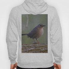 Gray Catbird near Sunrise Hoody