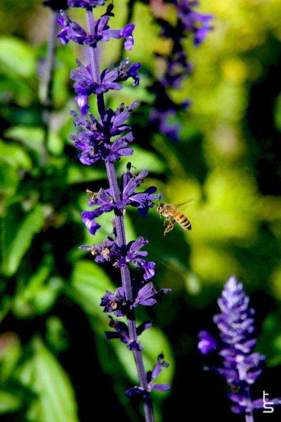 Purple Pollination Art Print