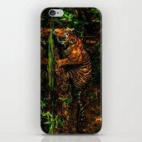 The Royal Bengal Tiger ( iPhone & iPod Skin