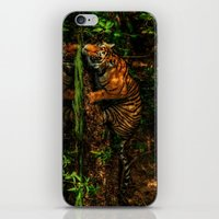 The Royal Bengal Tiger ( iPhone & iPod Skin