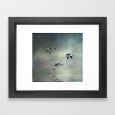 Avocet Dawn Framed Art Print