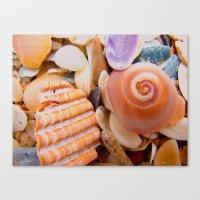 Macro Shells Canvas Print