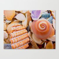 Macro Shells Canvas Print