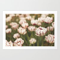 Candy Tulips Art Print