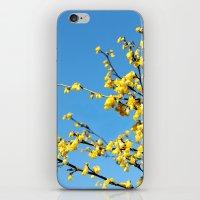 Boom Boom Bloom iPhone & iPod Skin