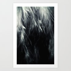 Sterling Feathers Art Print