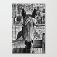 Waiting (Black and White Horse #1)  Canvas Print