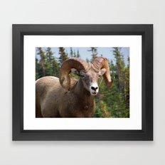 Big Horn Framed Art Print