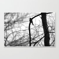 My song for you Canvas Print