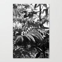 Catipillar Canvas Print