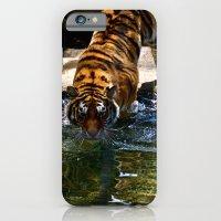 Swimming Tiger iPhone 6 Slim Case